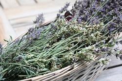 Lavendelernte